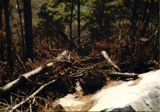 송전탑과 산림훼손 12