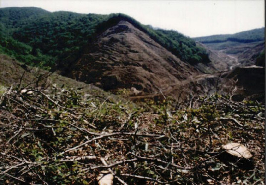 산림훼손 사진자료 9