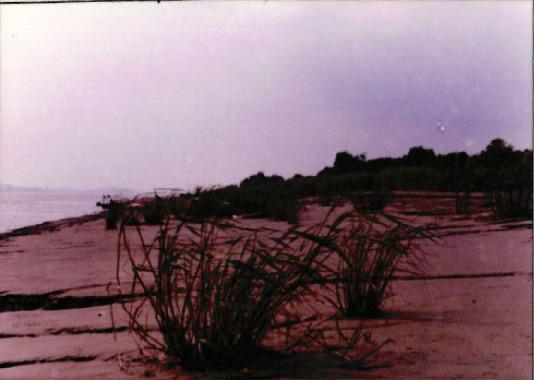 습지 조사 10