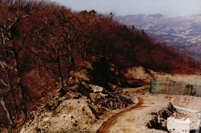 산림훼손 사진자료 5