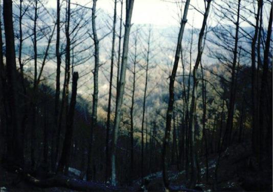 2000.4 강원도 산불 발화점인 양지마을의 산불현장 및 산불피해지역 현장사진 9