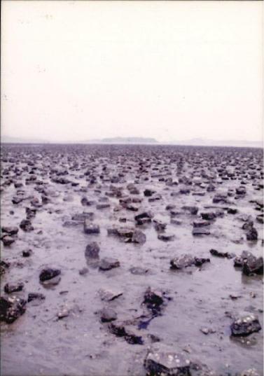 갯벌 및 해양 사진 7 - 97 재부도