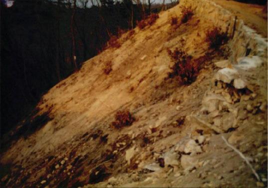 송전탑과 산림훼손 10