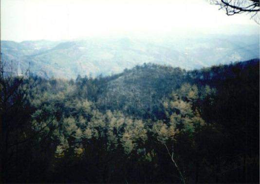 2000.4 강원도 산불 발화점인 양지마을의 산불현장 및 산불피해지역 현장사진 10