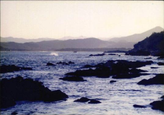 갯벌 및 해양 사진 12