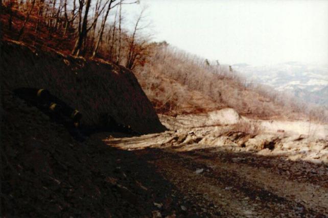 산림훼손 사진자료 7