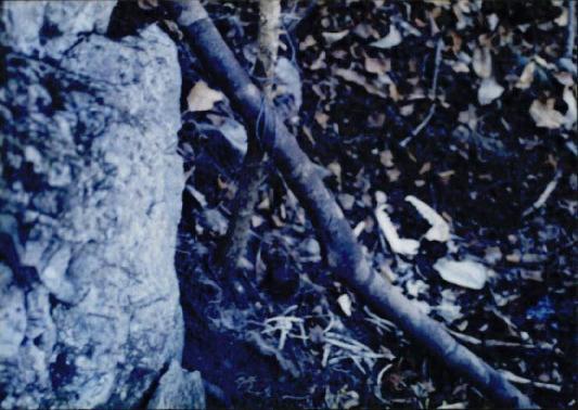 1998 강원 올무제거 11