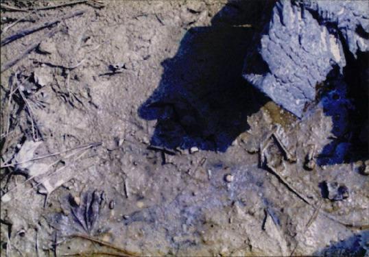 갯벌 및 해양 사진 15