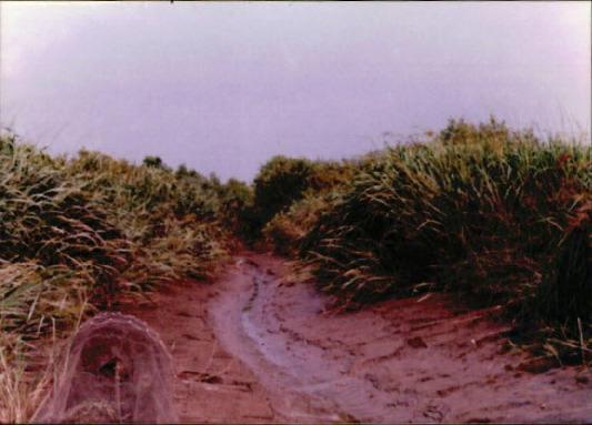 습지 조사 15