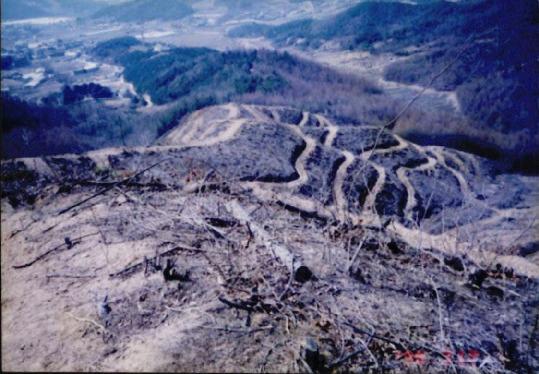 산림훼손 사진자료 14