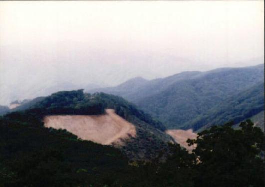 산림훼손 사진자료 8