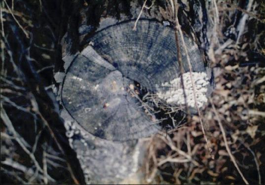 산림훼손 사진자료 12