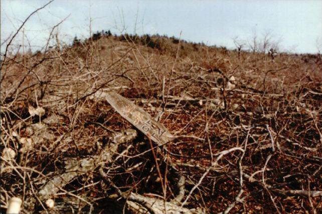 산림훼손 사진자료 3