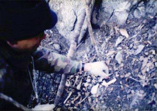 1998 강원 올무제거 14