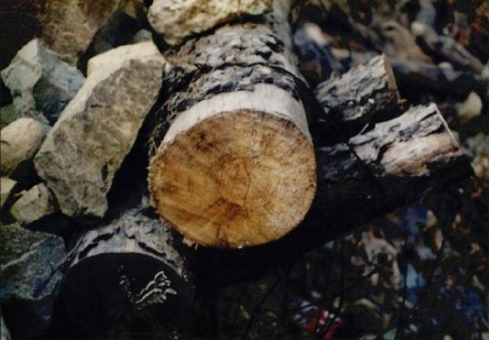 송전탑과 산림훼손 11