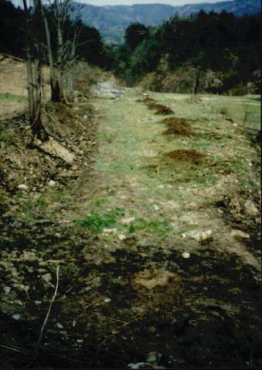 2000.4 강원도 산불 발화점인 양지마을의 산불현장 및 산불피해지역 현장사진 12