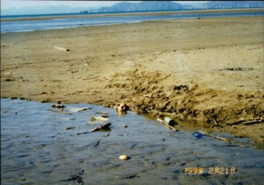 갯벌 및 해양 사진 17