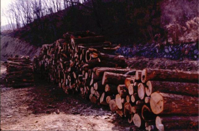 산림훼손 사진자료 2