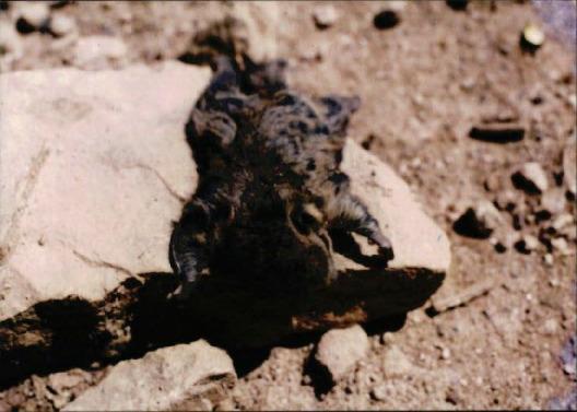 자연생태 기타 2 - 천연기념물 하늘다람쥐(설악구간)
