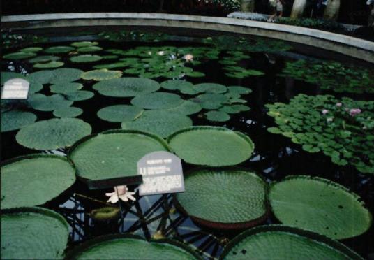 제주도 여미지 식물원 매각 반대운동 3