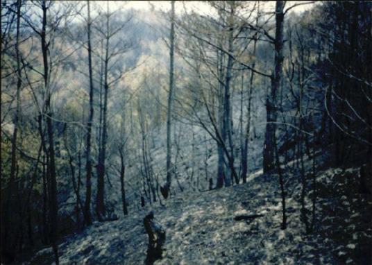 2000.4 강원도 산불 발화점인 양지마을의 산불현장 및 산불피해지역 현장사진 2