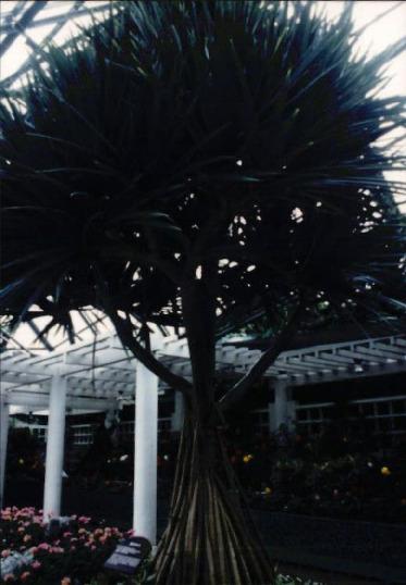 제주도 여미지 식물원 매각 반대운동 8