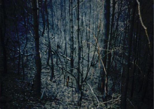 2000.4 강원도 산불 발화점인 양지마을의 산불현장 및 산불피해지역 현장사진 1
