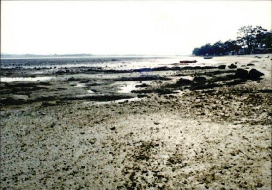갯벌 및 해양 사진 13