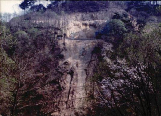 송전탑과 산림훼손 3