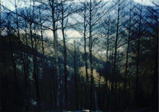 2000.4 강원도 산불 발화점인 양지마을의 산불현장 및 산불피해지역 현장사진 7