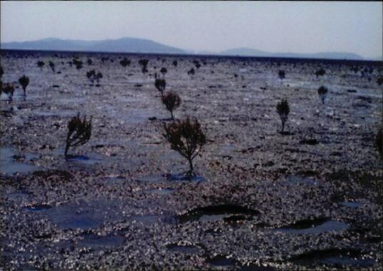갯벌 및 해양 사진 21