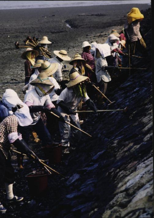 지워지지않는 기름오염