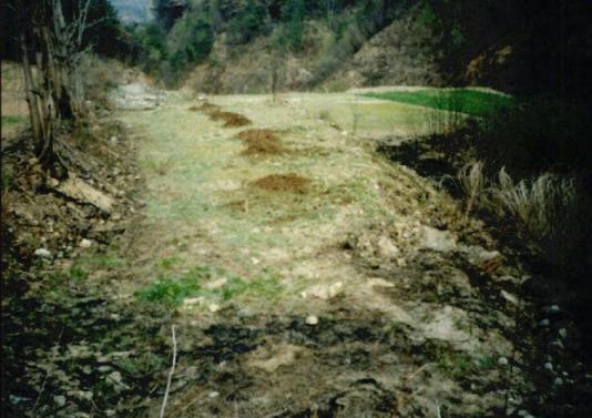 2000.4 강원도 산불 발화점인 양지마을의 산불현장 및 산불피해지역 현장사진 8