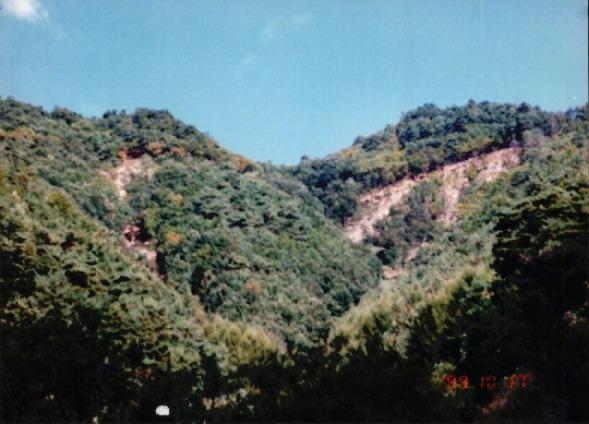 송전탑과 산림훼손 8