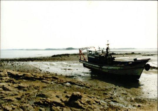 갯벌 및 해양 사진 6