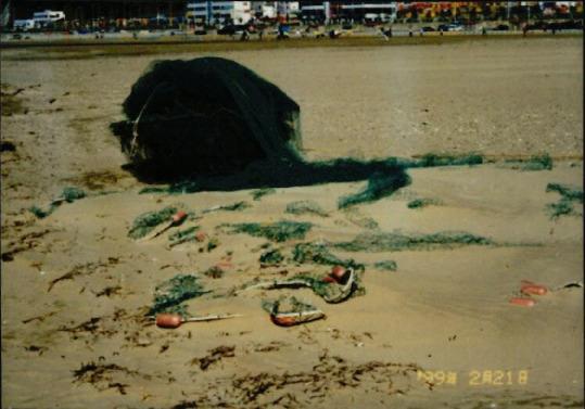 갯벌 및 해양 사진 18
