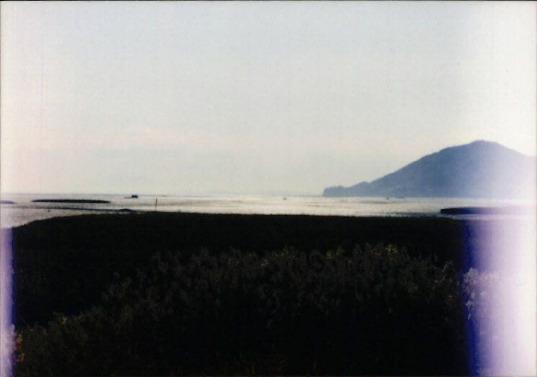 갯벌 및 해양 사진 5